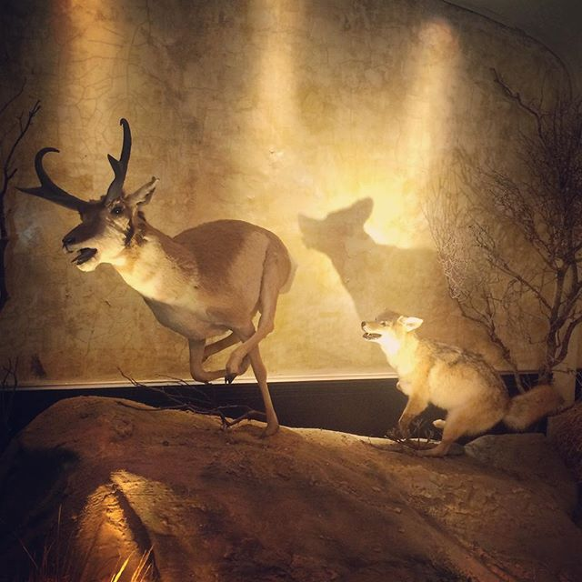 This deer and coyote forever locked in an eternal chase. Clifton's Cafeteria again. #dtla #losangeles