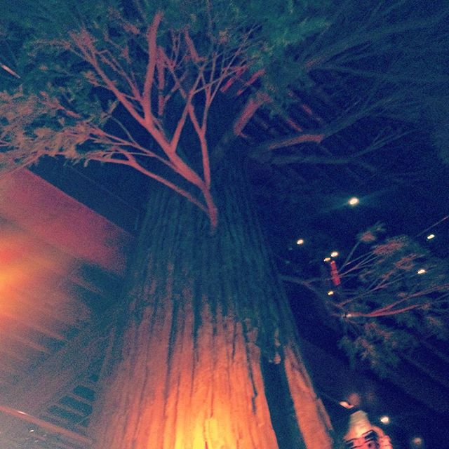 This is a giant redwood tree inside Clifton's Cafeteria. #dtla #losangeles
