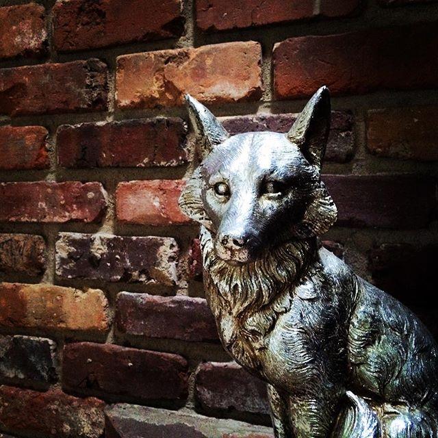 A silver fox. #dtla #losangeles