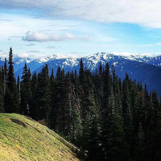 Hurricane Ridge.